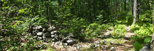 Stone wall in forest