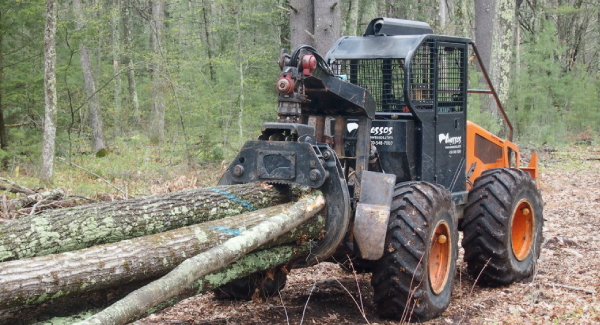 Sustainable Forestry and Firewood